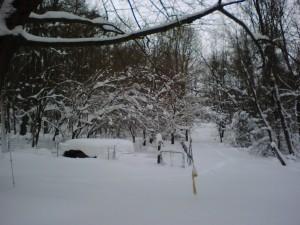 snowstorm goat pen